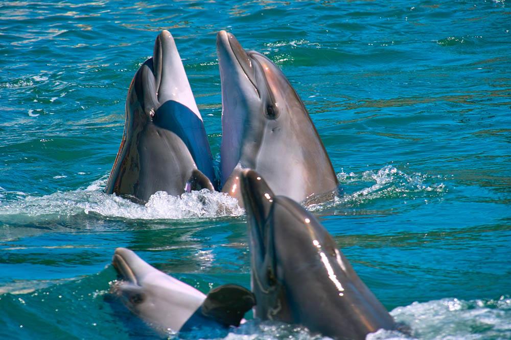 Танец дельфинов